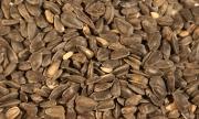 Semillas de girasol negras