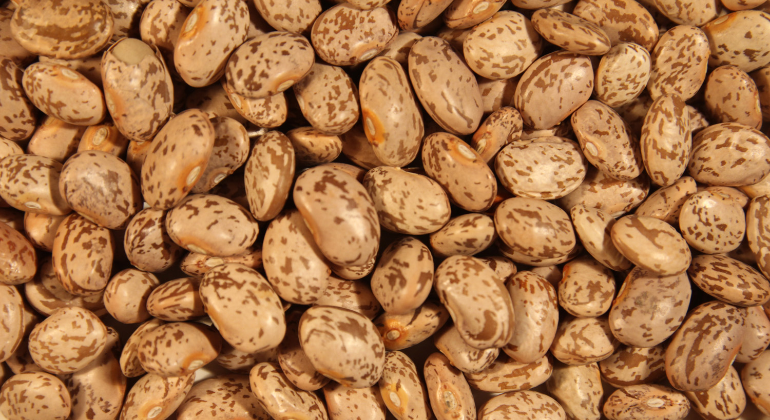 pinto beans These best pinto beans make for a scrumptious budget friendly meal dry pinto beans cooked with thick cut slab bacon fresh thyme and seasonings gives them just the right pop of flavor serve a bowlful alongside a skillet of hot buttered cornbread, sweet chow chow and a generous sprinkle of green.